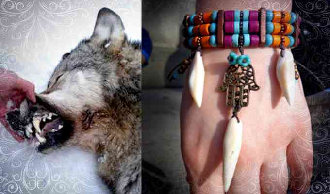 Браслет с зубами волка