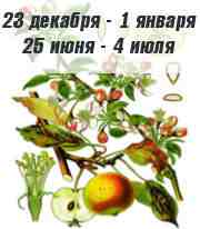 Характер яблони