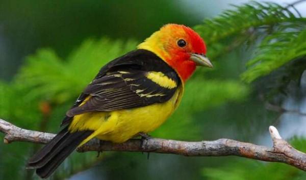 Что говорят приметы, когда птица случайно залетела в дом?