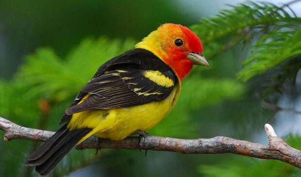 птица сидит на ветке