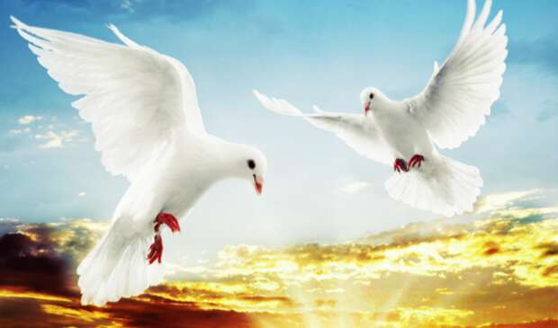 два белых голубка в небе