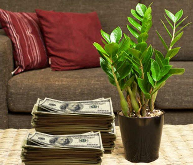 Растение приносящее богатство