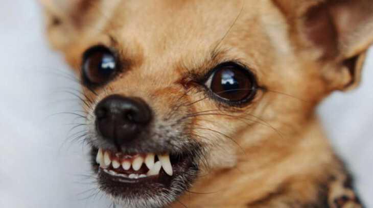 приснилась собака, которая кусается