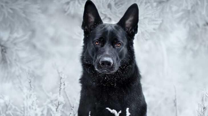 приснилась черная собака