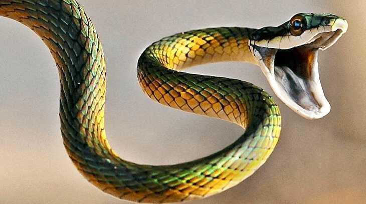 приснился укус змеи