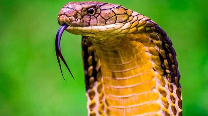 во сне мужчине привиделась змея