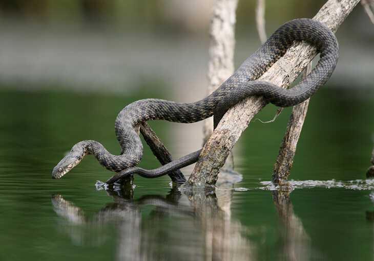К чему во сне укусила змея?