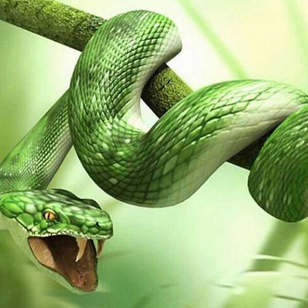 нападающая змея