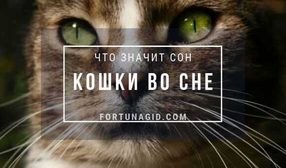 приснились кошки