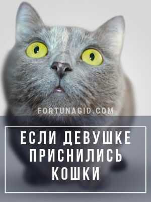 девушке приснились кошки